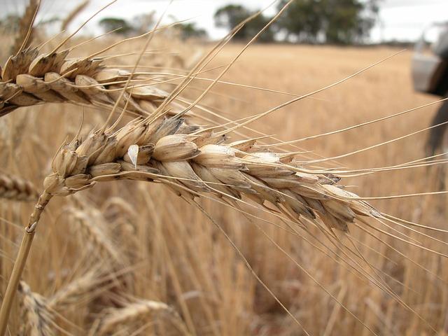 Komunikat wsprawie naboru wniosków ooszacowanie strat spowodowanych suszą